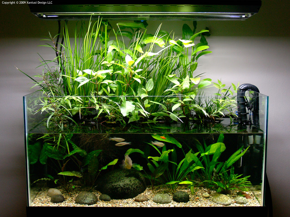 Interview with devin biggs chasing linnaeus for Growing plants with fish